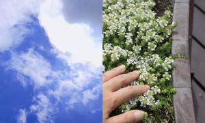 芝生に寝転んで見上げた青空(左)。芝生の端っこにはタイムが植えてある。立ち上がろうと手をついた時に香りが立ち上る細やかな演出(右)。